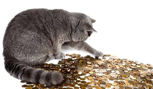 кот и деньги