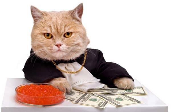 кот - богач