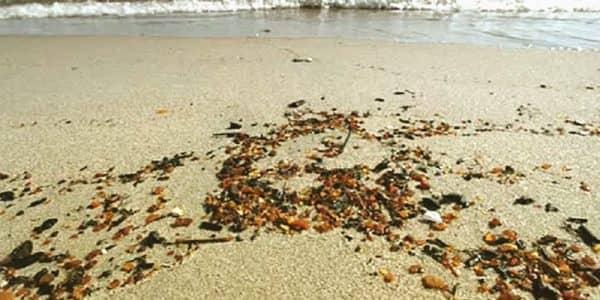 Балтийское море выбросило на берег огромные россыпи янтаря